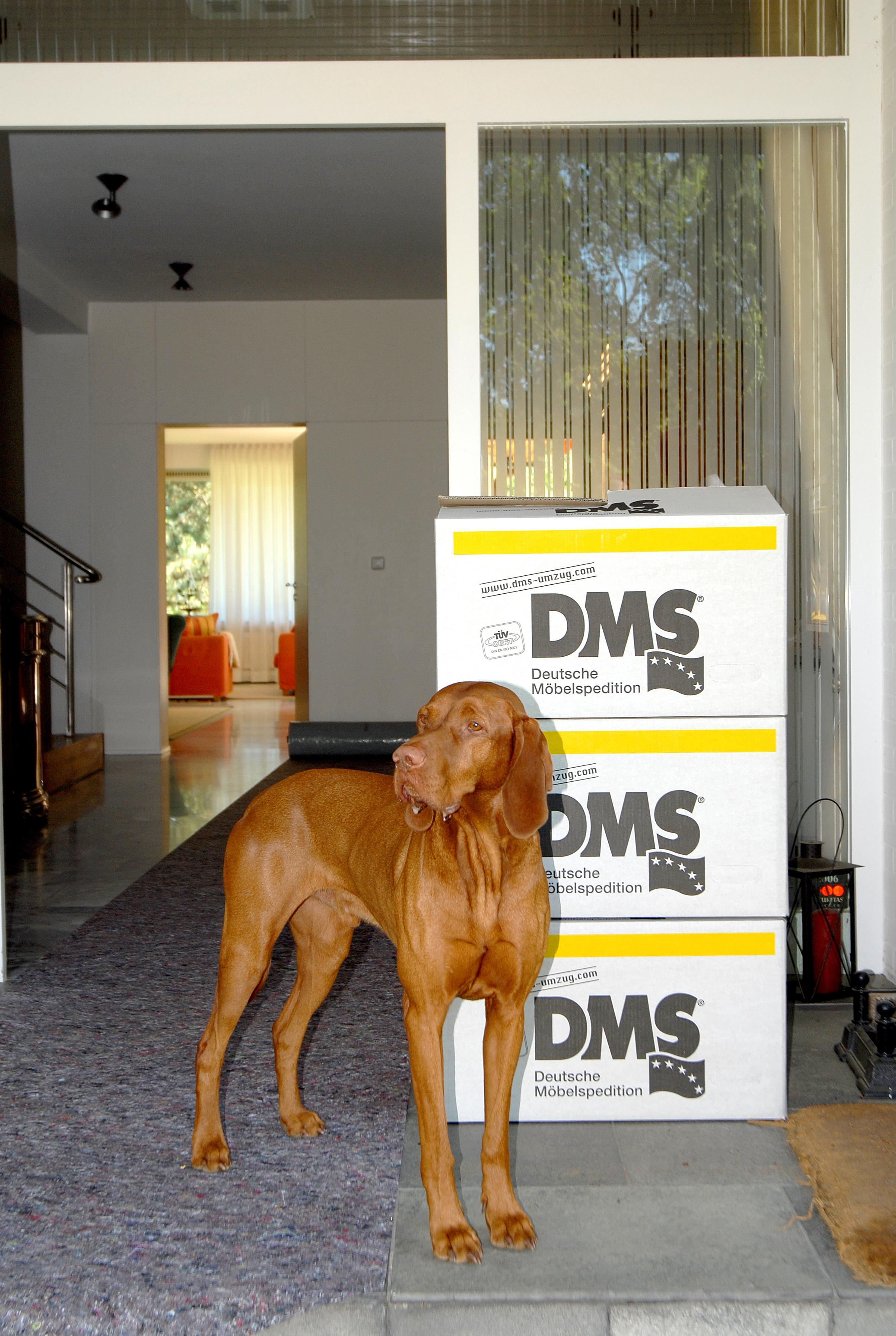 Beim Umzug mit Hund ist einiges zu beachten. DMS Ridder Möbeltransport in Wesel will das sich alle beim Umziehen wohlfühlen. Ob Mensch oder Tier.